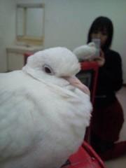 小泉ポロン 公式ブログ/悲しいご挨拶 画像2