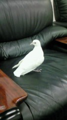 小泉ポロン 公式ブログ/ハトにフリーダム 画像1
