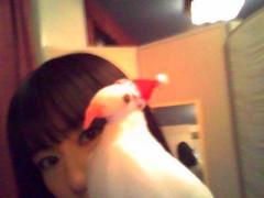 小泉ポロン 公式ブログ/クリスマスバージョン 画像3