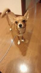 大塚宝 公式ブログ/おはようございます! 画像1