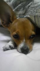 大塚宝 公式ブログ/愛犬「大地」 画像1