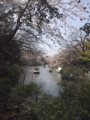 岩村さちこ 公式ブログ/さくら咲く 画像1