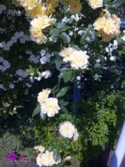 岩村さちこ 公式ブログ/ツツジは薄いピンクがスキ 画像2