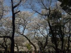 岩村さちこ 公式ブログ/さくら咲く 画像2