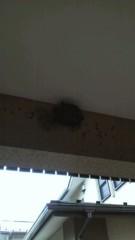 あずに 公式ブログ/燕の巣 画像1