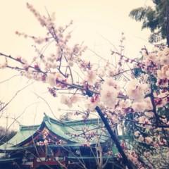 華 みき 公式ブログ/梅 画像1