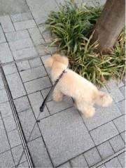 三浦理恵子 公式ブログ/お散歩 画像1
