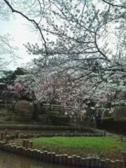 巽 穂の香 公式ブログ/さくら-っ 画像1