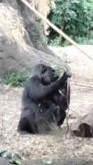 川崎健希 公式ブログ/上野動物園に行って来ました 画像3