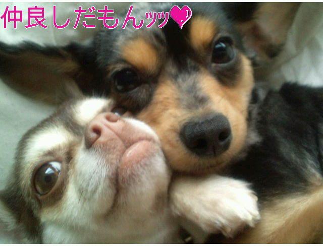 愛犬のピートとレア∩^ω^∩