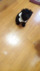 たけうち亜美 公式ブログ/GW 画像1