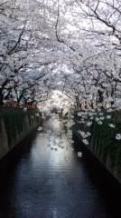 桜京子 公式ブログ/桜@目黒川 画像1