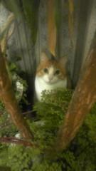 桜京子 公式ブログ/借りてきた猫★ 画像1