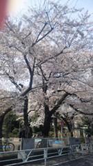 近藤麻衣子 公式ブログ/春� 画像1