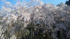 近藤麻衣子 公式ブログ/春がきた〜! 画像1