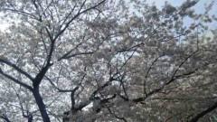 近藤麻衣子 公式ブログ/春� 画像2