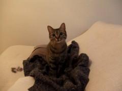 船ヶ山 哲 公式ブログ/我家のネコのテコちゃんです。 画像1