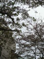 弥音夏 公式ブログ/葉桜 画像1