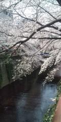 岸村ユウスケ 公式ブログ/満開 画像1