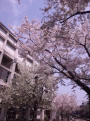 石田美菜子 公式ブログ/桜はもう散り際 画像1