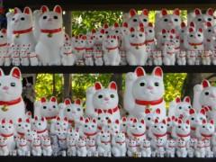 石田美菜子 公式ブログ/猫に恩返し☆ 画像2