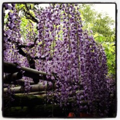 石田美菜子 公式ブログ/奈良の旅2 画像3
