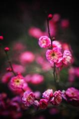 石田美菜子 公式ブログ/散歩でぐるぐる。 画像1