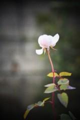 石田美菜子 公式ブログ/冬のある日 画像2