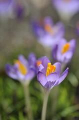 石田美菜子 公式ブログ/春が待ち遠しいのは私だけじゃなかった! 画像1