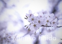 石田美菜子 公式ブログ/今日から4月ですね☆ 画像1