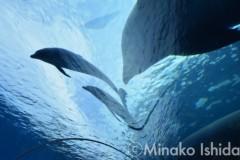 石田美菜子 公式ブログ/水族館へGO! 画像1