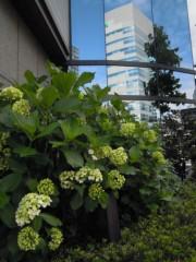 石田美菜子 公式ブログ/台風一過 画像1