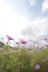 石田美菜子 公式ブログ/ピンクリボン月間 画像1