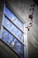 石田美菜子 公式ブログ/冬のある日3 画像1