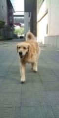 KONISHIKI 公式ブログ/今日の散歩 画像1