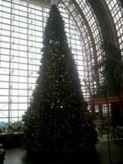 KONISHIKI 公式ブログ/クリスマスツリー 画像1