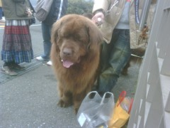 KONISHIKI 公式ブログ/dog heaven 画像1