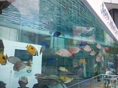 あらいすみれ 公式ブログ/銀座の水族館♪ 画像1