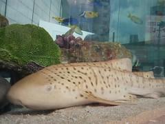 あらいすみれ 公式ブログ/銀座の水族館♪ 画像3