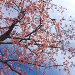 あらいすみれ 公式ブログ/桜 画像1