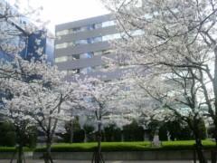 あらいすみれ 公式ブログ/実家の桜逹 画像1