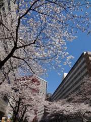 あらいすみれ 公式ブログ/桜キャッチゲーム♪ 画像2
