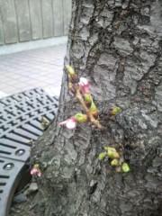 あらいすみれ 公式ブログ/ミニ桜ちゃん 画像1