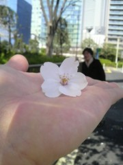 あらいすみれ 公式ブログ/桜キャッチゲーム♪ 画像3