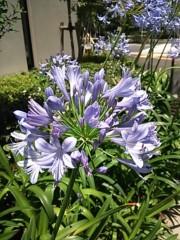 あらいすみれ 公式ブログ/お花 画像1
