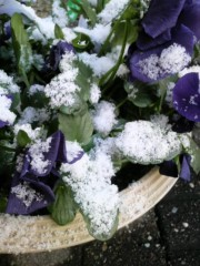 あらいすみれ 公式ブログ/また雪です(+_+) 画像1