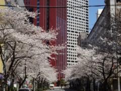 あらいすみれ 公式ブログ/桜キャッチゲーム♪ 画像1