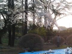 内海亜耶乃 公式ブログ/桜♪ 画像1