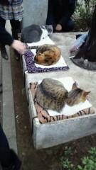 井上敬一 公式ブログ/ヒョウ柄に寝るネコ 画像1