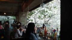 井上敬一 公式ブログ/桜咲く 画像1
